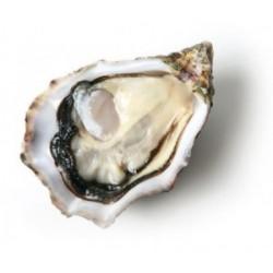 Huîtres Krystale N°2