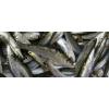 Sardines Bretonne