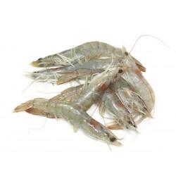 Crevettes Crues Moyennes