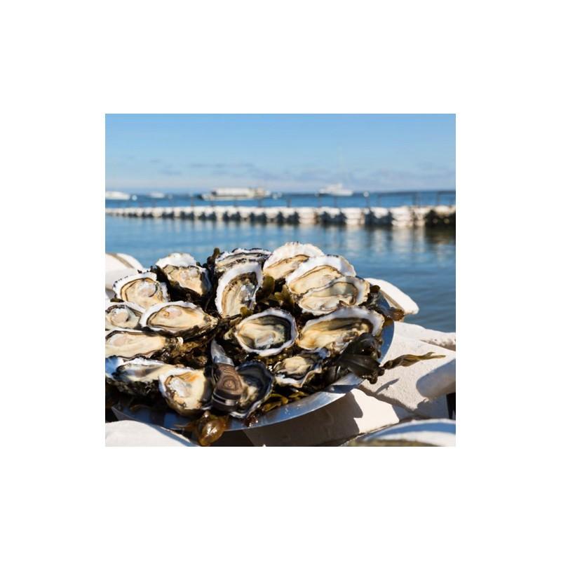Huîtres de Bouzigues
